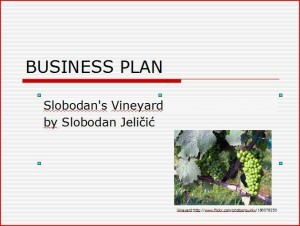 Slobodan's Vineyard